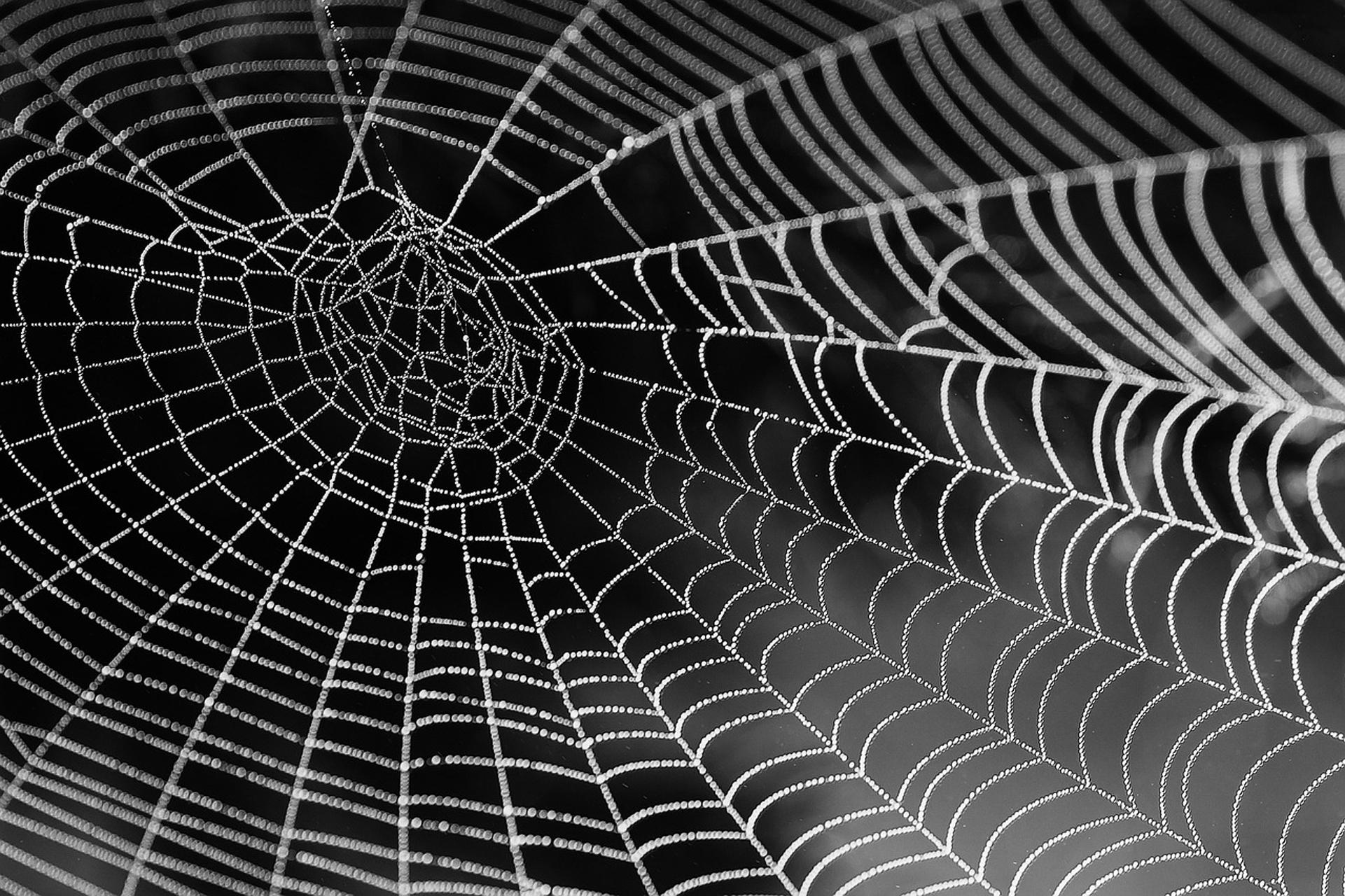 Netzwerk-Spinnennetz-Verbindung-NWB IMMOBILIEN